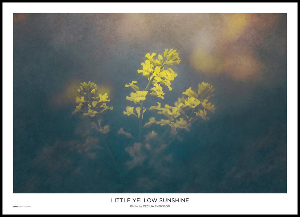 Little Yellow Sunshine