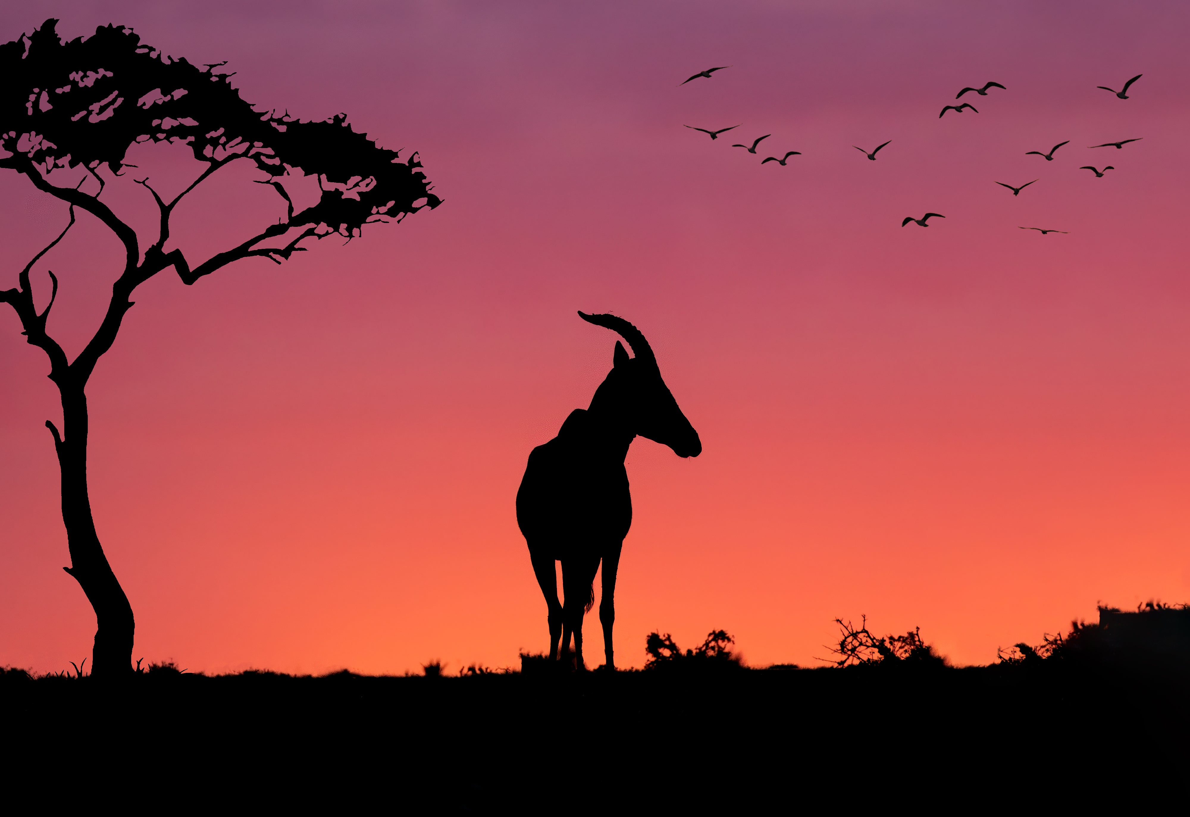 Gazelle silhouetted sunset ...