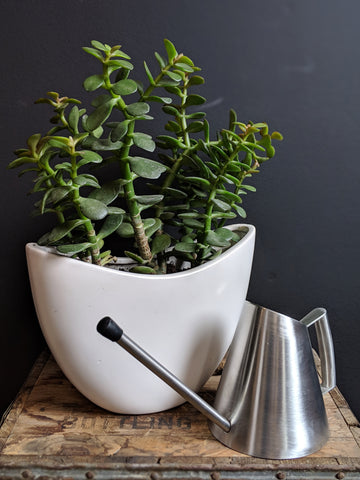 Jade Planter with Watering Can