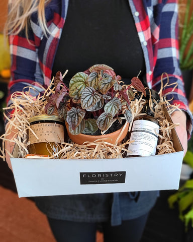 Plant and Home Fragrance Gift Set