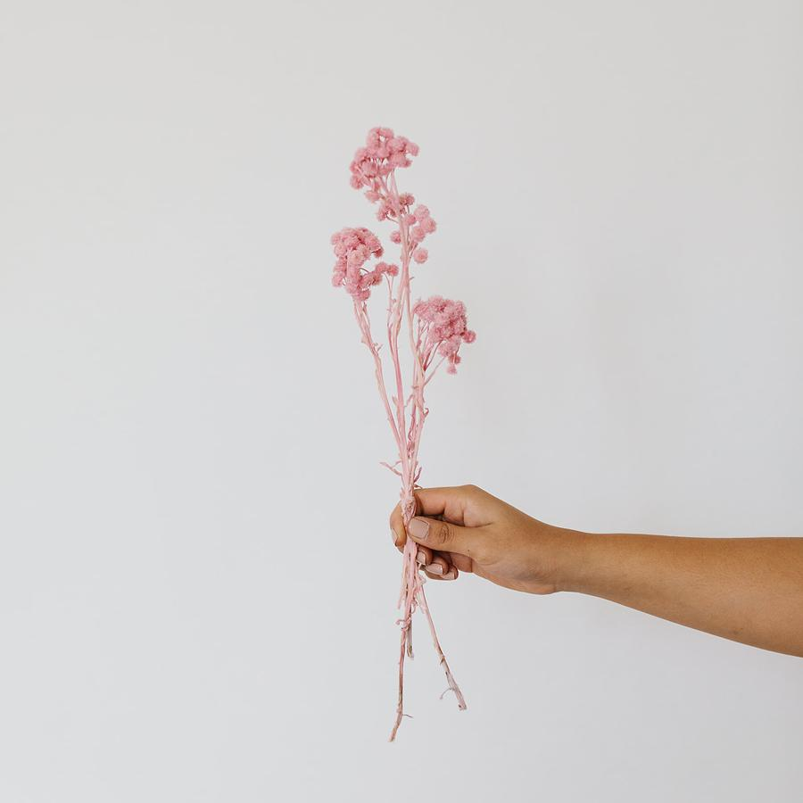 Japanese Straw Flower - 3 Stems