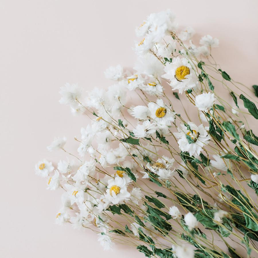 Meadow Daisies (Ludanniao) - Small Handful Bunch