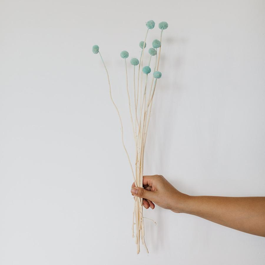 Billy Buttons (Craspedia) - 10 Stems