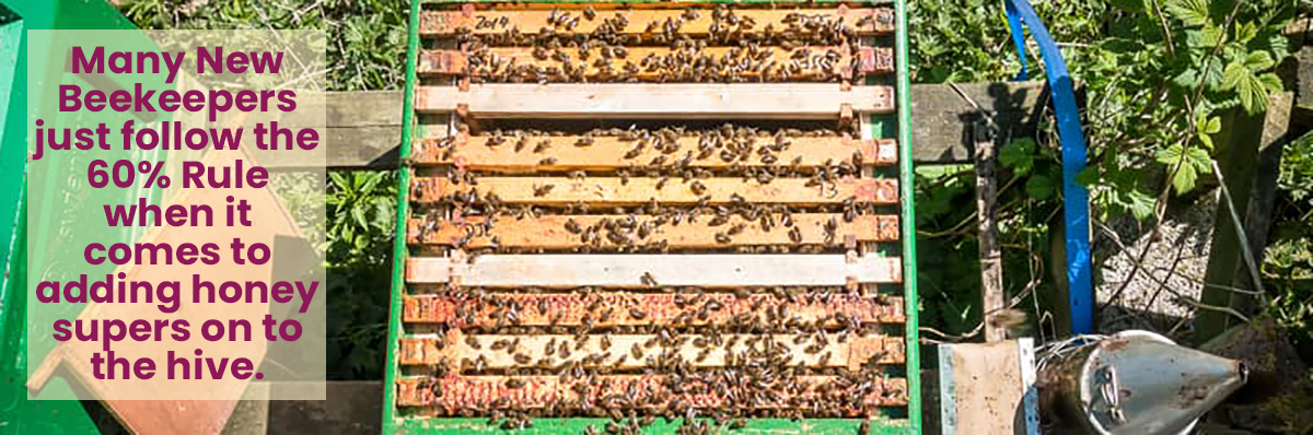 Many New Beekeepers just follow the 60% Rule when it comes to adding honey supers onto the hive. This hive could use a super.