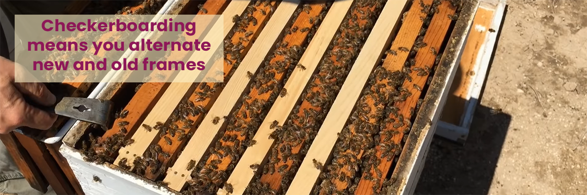 A hive that has frames that alternate between new fresh frames and old filled frames is called checkerboarding.