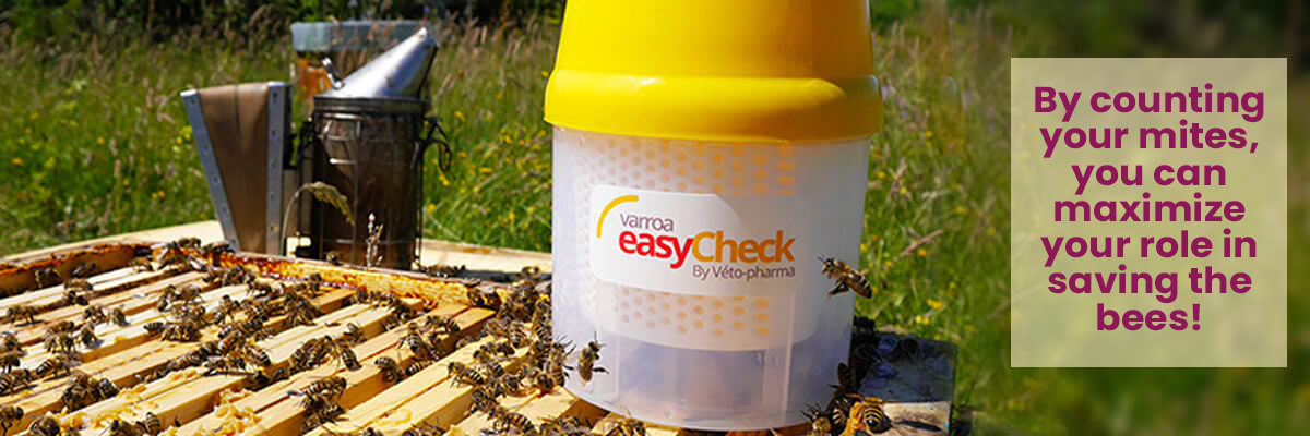 Count your Varroa Mites so that you can help save the bees. EasyCheck sitting on a beehive alongside a smoker.