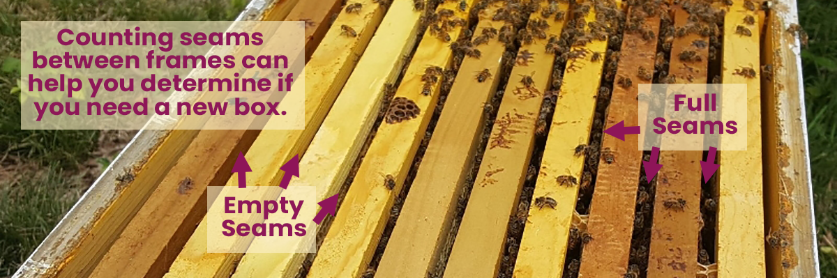 Beekeepers should count the number of seams between frames that are full of bees to determine when they should add a box.