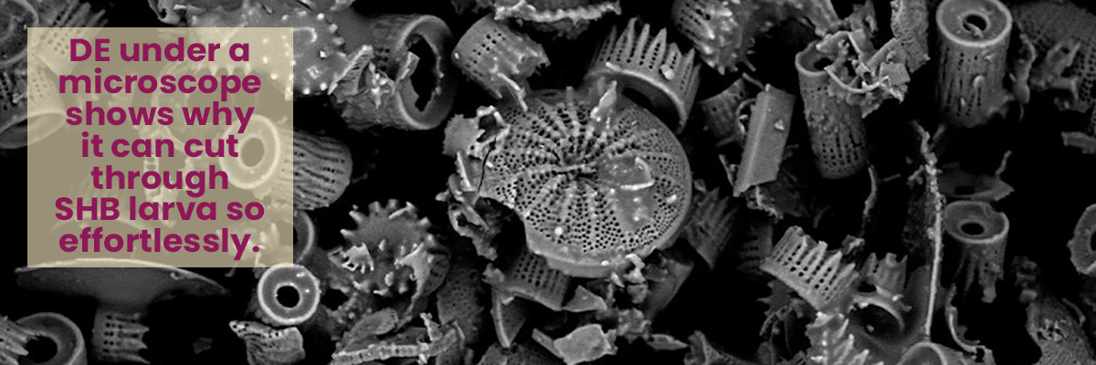 A microscopic view of Diatomaceous Earth shows how sharp the edges of these little fossils really are.
