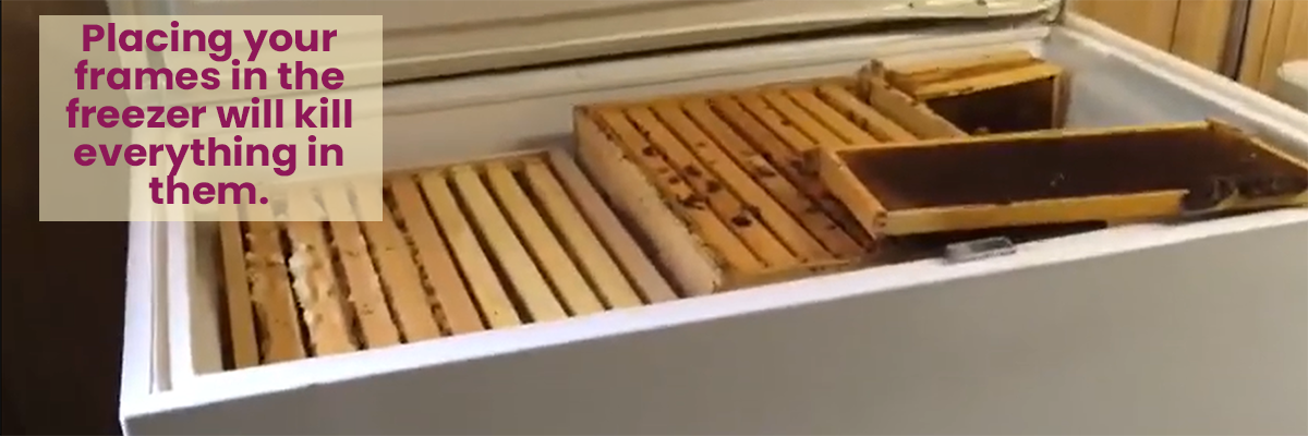 Putting bee frame into the freezer will kill all small hive beetles, varroa mites, and wax moths