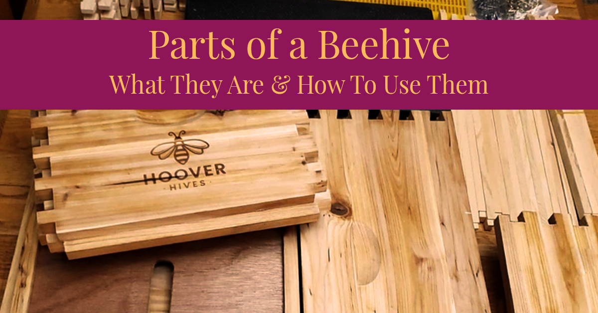 Scattered Wax Coated Wooden Hoover Hives Parts With Title Banner That Says Parts of a Beehive What They Are & How To Use Them