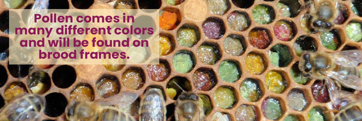The cells in this beehive have a wide range of colors. Almost every color of the rainbow is on this frame.