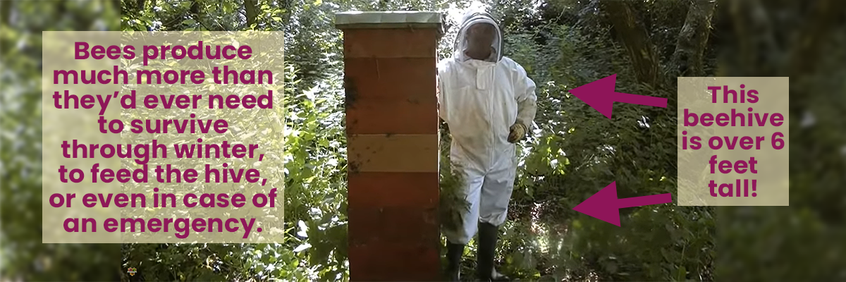 Bees produce much more than they'd ever need to survive through winter, to feed the hive, or even in case of an emergency.