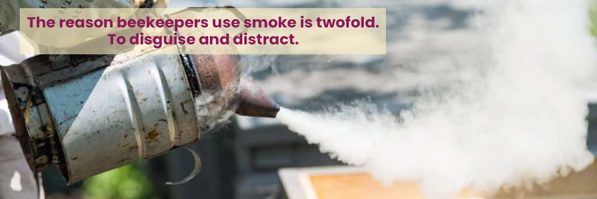 A Beekeeping Smoker That Is Lit and Is Smoking An Open Hive. Heavy smoking can frustrate your bees over time.