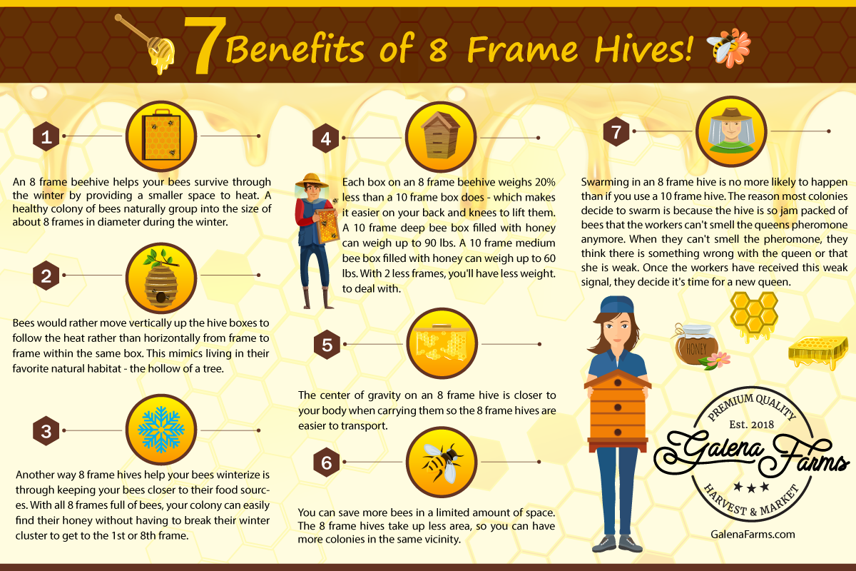 7 Benefits Of an 8 Frame Beehive Infographic That Gives A Teaser Of All 7 Reasons