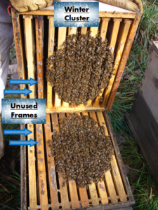 10 frame beehive tilted open during winter to reveal a cluster of bees taking up only 8 frames