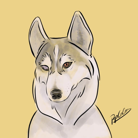 Silver the Husky - Canvas