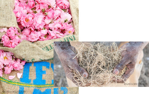 Raw Materials sustainability Essential Parfums
