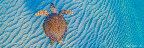 Pacsafe-turtle-fund-clean-oceans-end-single-plastic-use