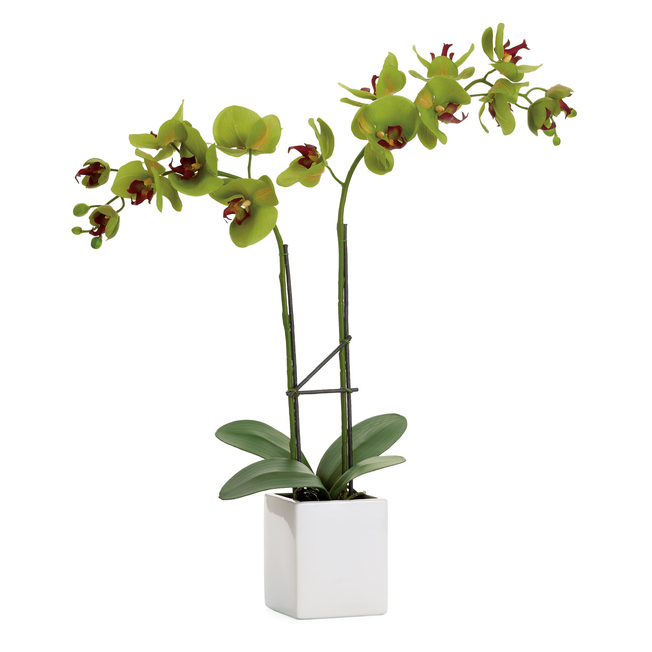 Orchid in Double Stem Pot