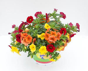 Trixi® Sunset Hanging Baskets