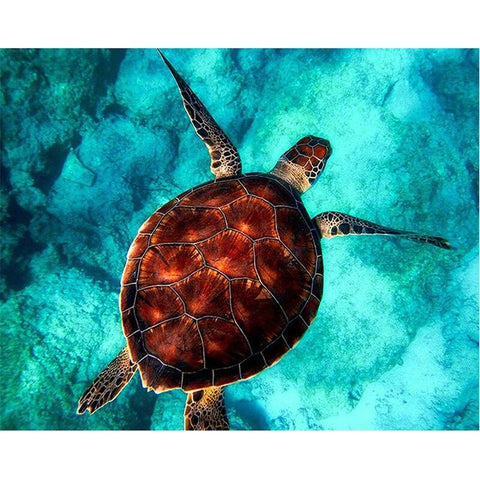 Tableau Tortue<br/> Turquoise - Tortue Lingo