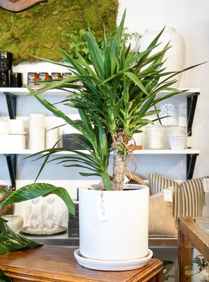 Modern White Planter with Saucer