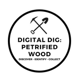 Digital Dig Petrified Wood