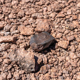 Probably the coolest thing you can add to an out of the world excavation is a real meteorite.