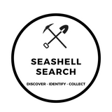 Seashell Search Excavating Adventures