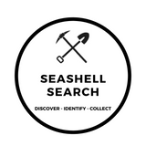 Seashell Search Excavating Adventures Extreme Kit