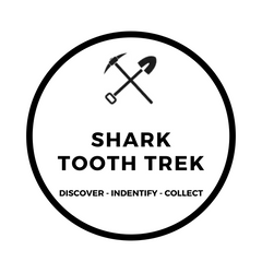 Excavating Adventures Shork Tooth Trek Dig Kit Filled With Fossilized Shark Teeth