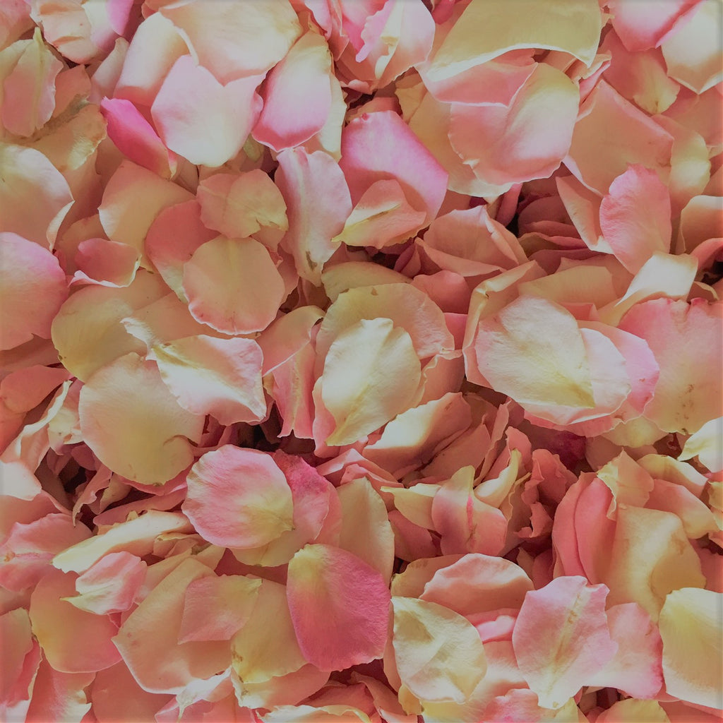 We Have These Gorgeous Petite Baby Pink Petals In Stock!