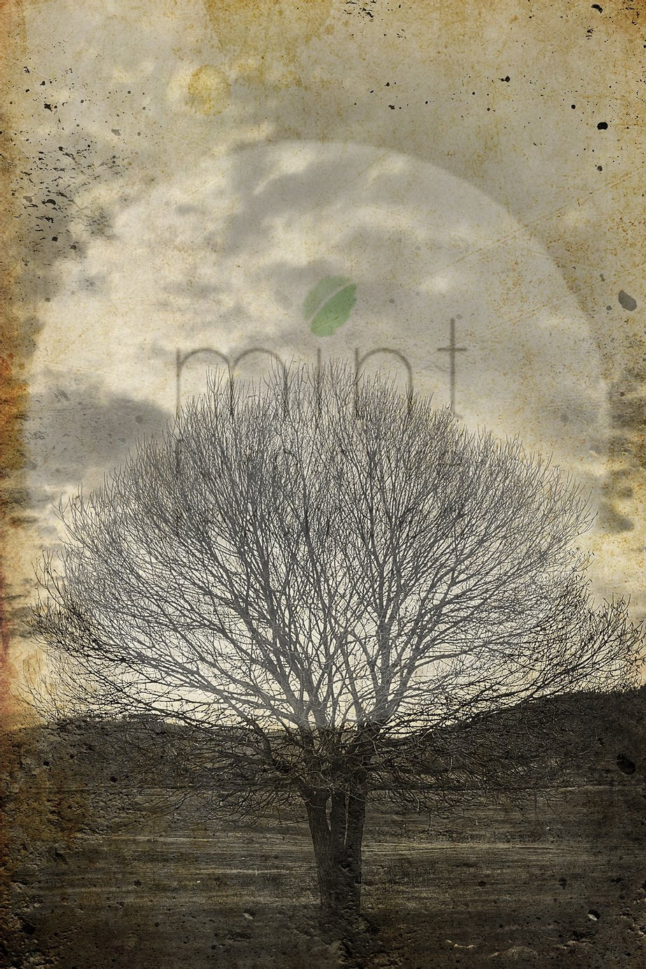 Lone Sepia Tree MINT Decoupage Paper