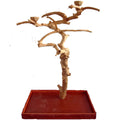 Medium Java Wood Tree Boxed AE250M