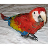 Scarlet Macaw baby available at Tropical Wings Parrot Place