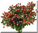 Herbal Rosehips