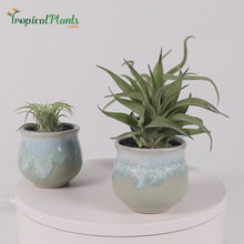 Load and play video in Gallery viewer, Tropical Plant Tillandsia Air Plant Blue Gray Pots Stone Set Video