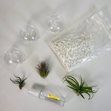 Load image into Gallery viewer, Air Plant Tillandsia Trio - Glass Globe Orbs