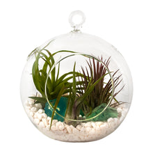 "Load image into Gallery viewer, Air Plant Terrarium Set with 3 Live Air Plant Tillandsias, 5.5"" Glass Globe, White Stones & Seafoam Glass Rock"