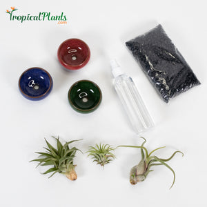 Tropical Plant Black Gravel Tillandsia Air Plant  Blue, Red and Green Round Ceramic Pot Set 1
