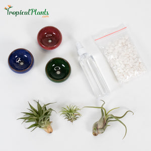 Tropical Plant White Gravel Tillandsia Air Plant  Blue, Red and Green Round Ceramic Pot Set 1