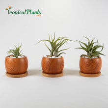 Load image into Gallery viewer, Tropical Plants Tillandsia Airplant Wood Round Pots