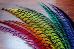 "30-35"" Natural Dyed Zebra Pheasant Tails"