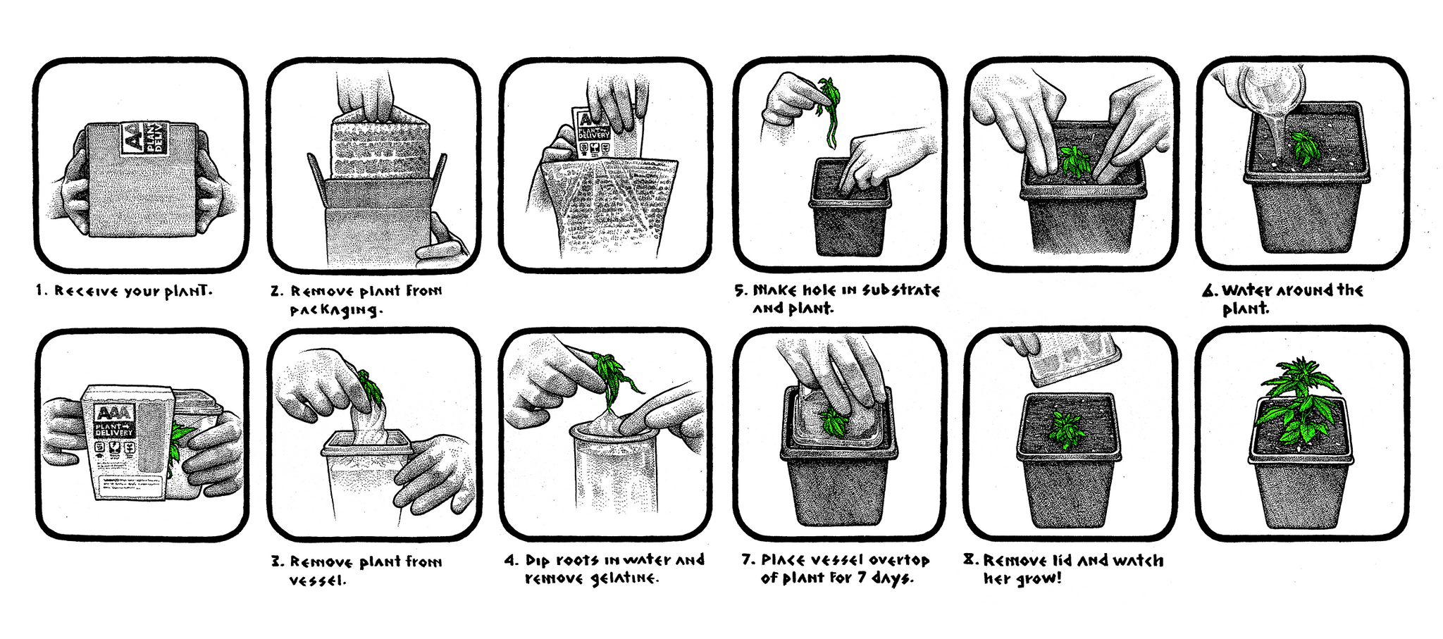 AAA PLANT DELIVERY - STEP BY STEP INSTRUCTIONS