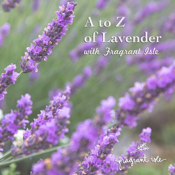 A-Z of Lavender – Fragrant Isle Lavender Farm & Shop