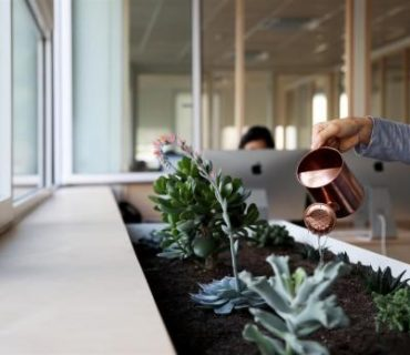 Greenery in the Office: Enhancing your Productivity