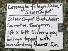 Load image into Gallery viewer, Lessingia filaginifolia 'Silver Carpet' (1 qt) | Silver Carpet Aster (1 qt)