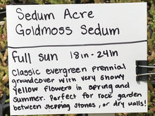 Load image into Gallery viewer, Sedum acre | Goldmoss Sedum