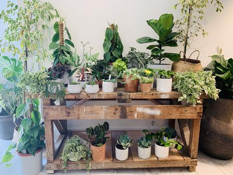 How to create your own indoor oasis