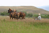 Horse-Drawn Loose Haying at Grant-Kohrs Ranch National Historic Site in Deer Lodge, Montana